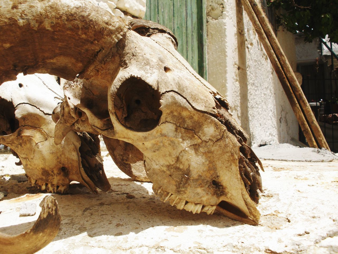 animal, animal themes, animal body part, animal skull, no people, bone, day, close-up, animal wildlife, one animal, nature, vertebrate, sunlight, mammal, architecture, animal bone, focus on foreground, livestock, outdoors, animal head, herbivorous