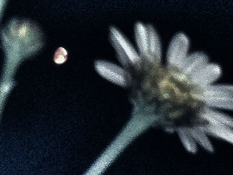 My side of the moon ...now from my bed Goodnight Moon Sky_collection Eyem Best Shots Times In Times That Are Not Times