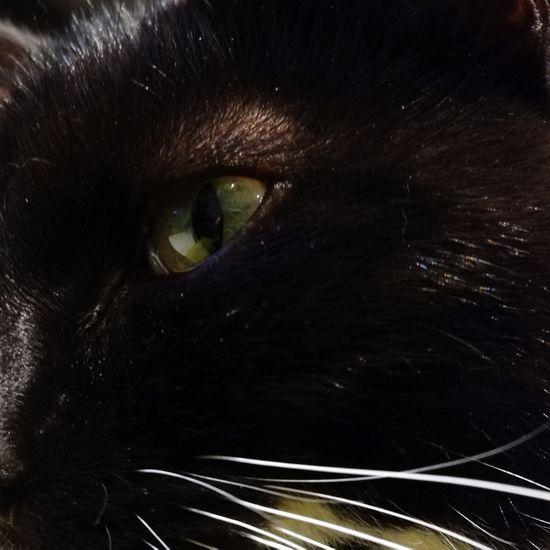 Cats Eye. Feline Black Color Animal Eye Domestic Cat Domestic Animals Animal Themes Close-up