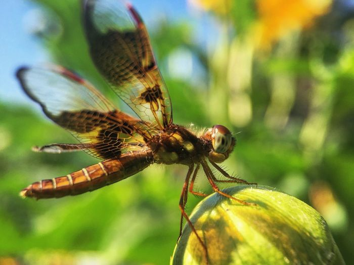 Macro Photography Macro Beauty Dragonfly Nature Photography Insects