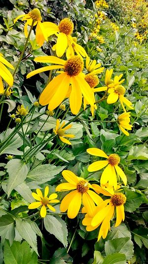 Flower Flower Collection Flower And Leaves Flower In The Garden Color Of Nature Beauty Of Nature Beauty Of Flower Flower Color Yellow Flower Yellow And Green Beautiful Nature Flower Photography Flowering Plants