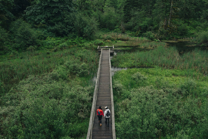 High angle view of people walking on footbridge in forest