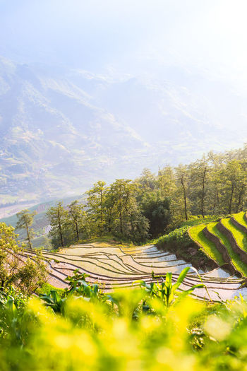 Rice field in Sapa with an incredible view Plant Landscape Beauty In Nature Land Field Growth Scenics - Nature Environment Tranquil Scene Nature No People Green Color Outdoors Rice Terraced Field Vietnam Travel Travel Destinations Sapa Mountains Selective Focus Tranquility Sky Day Tree Cloud - Sky Farm Agriculture Rural Scene