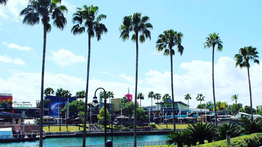 Universal Studios Orlando Tree