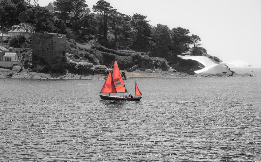 A boat with red sails in Fowey harbour Colorkey Seagull Red Sailing Ship Blackandwhite Leisure Activity Nautical Vessel Non-urban Scene Outdoors Sailboat Sailing Scenics - Nature Sea Water Waterfront Red Sailing Ship Blackandwhite Leisure Activity Nautical Vessel Non-urban Scene Outdoors Sailboat Sailing Scenics - Nature Sea Water Waterfront
