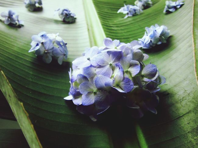 Look at the flowers. Nature Peru Traveling FlowerloversFlowerlovers