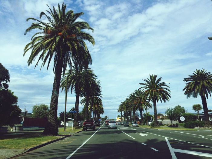 Palm trees and in 2 weeks is Christmas. What a life! Globetrotter New Zealand Traveling