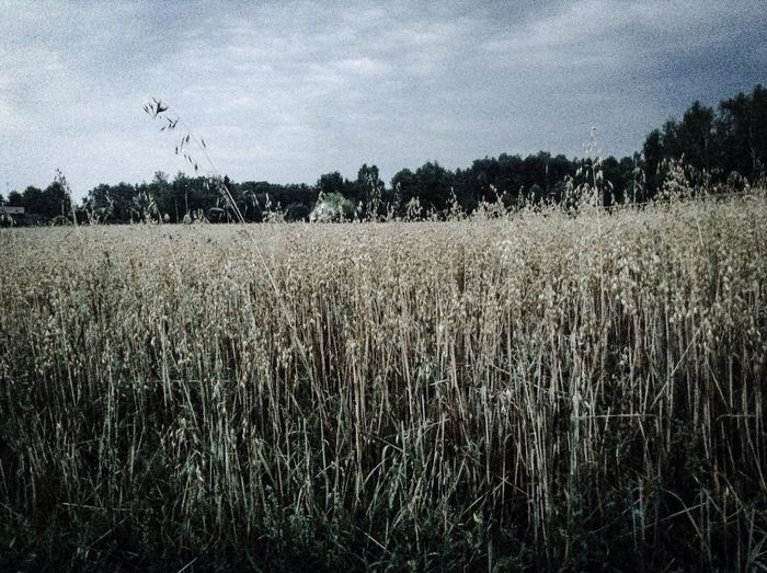 Summer in Poland is really cool! Today I went for a walk through some small villages and by the way, I shot this great pic. Belunia . Popular Photos