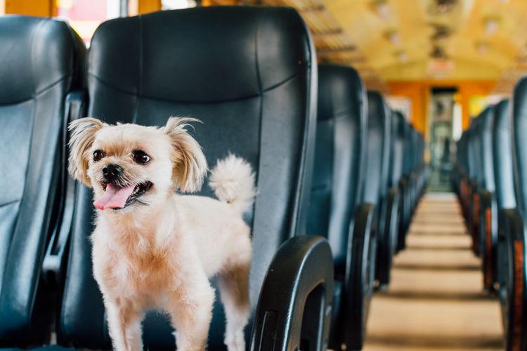 Portrait of dog sitting in bus