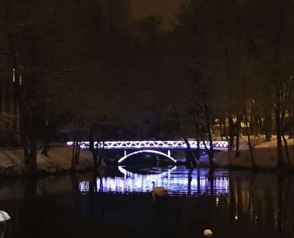 Swan Water Beidge Chinese Lake An Eye For Travel Reflection Winter Luxembourg Night Arts Culture And Entertainment Water No People Outdoors Ice Hockey Hockey Ice Rink