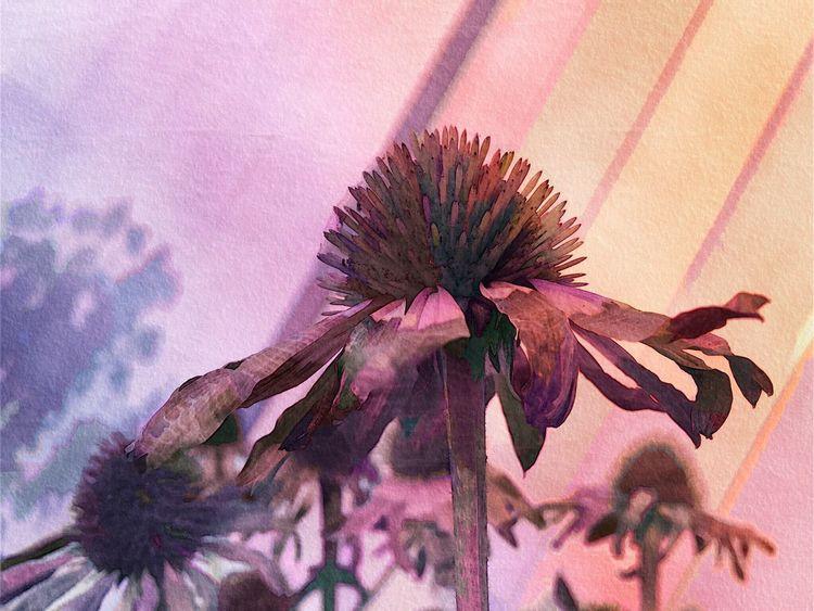 Flower Flower Head No People Digital Art Digital Painting Digital Watercolor Petal Fragility Nature Plant Growth Outdoors Blooming