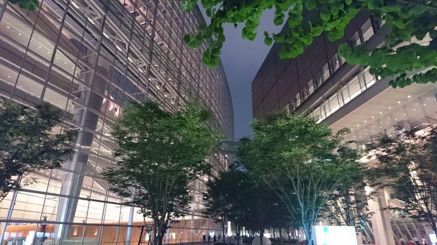 Enjoying Life Tree Park Tokyo,Japan Green Night Night Lights
