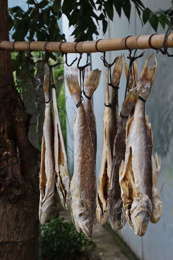 Close-up Day Dried Fish  Dried Food Drying Fish Food Food And Drink Freshness Hanging Healthy Eating Nature No People Outdoors Seafood