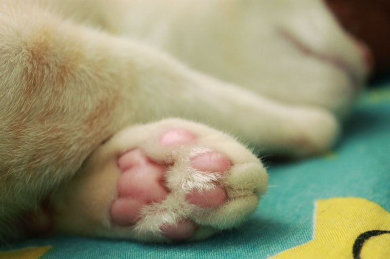 Cat's paw Cat's Paw Cat Domestic One Animal Pets Mammal Domestic Animals Animal Themes Animal Dog Close-up Canine Sleeping Small Childhood Animal Body Part Child Eyes Closed  Indoors  Toy Baby Young Animal