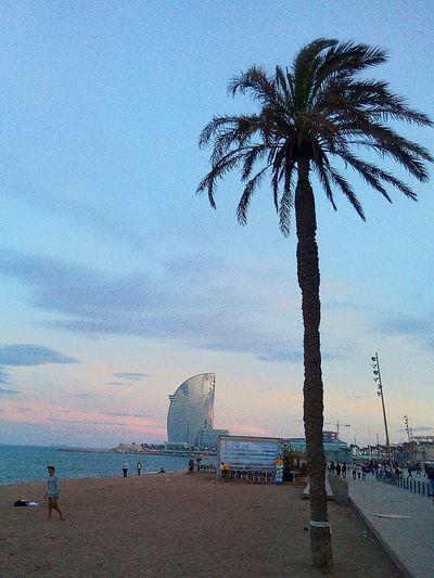 Urban Oasis Urbanphotography Urban Escape My Running View Barcelona Barcelona♡♥♡♥♡ Barceloneta Whynot Neighborhood Map