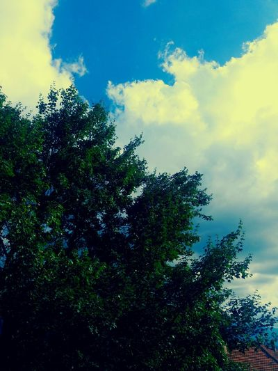 Tree Sky Low Angle View Growth Blue Cloud - Sky Cloud Beauty In Nature Scenics Nature Branch Tranquility Tranquil Scene Day Green Color Outdoors Treetop High Section Lush Foliage Green