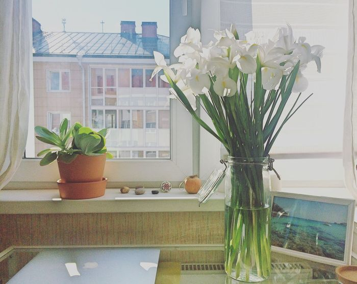 My Favorite Place Flower Vase Indoors  Table Freshness Fragility Potted Plant Window Bouquet Glass - Material Transparent Petal Flower Pot Flower Head Growth Bunch Of Flowers Flower Arrangement Houseplant Focus On Foreground Flowering My Room MyRoom Iris Spring