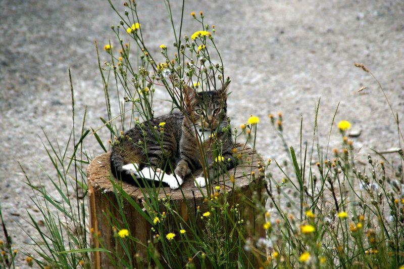 Portrait of a cat on tree stump