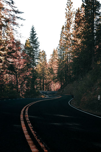 Scenic mountain region comprising the Sierra Nevada Range & Yosemite Valley of the Merced river; famous for giant sequoias, huge rock domes & peaks. Yosemite National Park Beauty In Nature Day Motorsport Nature No People Outdoors Road Sky The Way Forward Tree Winding Road