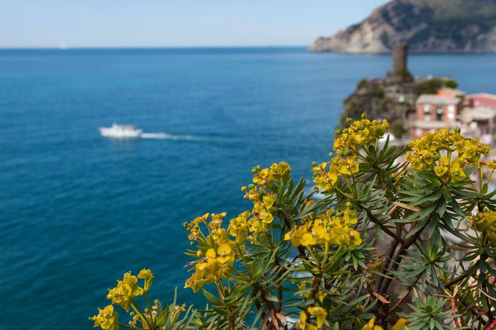 5 Terre Beauty In Nature Close-up Day Flower Flowers Focus On Foreground Foreground Growth Horizon Over Water Italy Landscape Liguria Mediterranean  Nature No People Outdoors Plant Scenics Sea Sky Tranquil Scene Tranquility Water Yellow