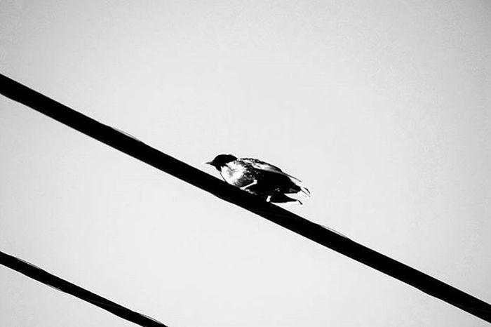 H i g h L i n e . . . . . Bird Birdsofinstagram Mobilephotographer Mobilephotography Shotonnikon Nikon_photography_ Dslrphotography DSLR Newhampshire Timeless Blackandwhitephotography Bnw Bnw_worldwide Shootergram Bw_photooftheday Bwstyleoftheday Monopix Landscapephotography Igersbnw Monochrome Fineartphotography Fineart Artistic Jaw_dropping_shots Monoart bwwednesday passion lovewhatyoudo photographyoftheday