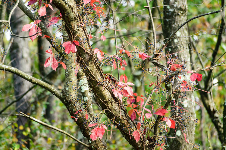 Beauty In Nature Branch Close-up Day Flower Focus On Foreground Fragility Freshness Growth Leaf Nature No People Outdoors Tree