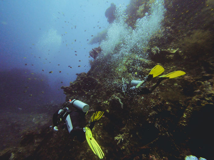 Diving Scuba Diving Adventure Animal Animal Themes Animal Wildlife Animals In The Wild Aqualung - Diving Equipment Aquatic Sport Diving Equipment Diving Suit Divingphotography Exploration Fish Marine Nature Scuba Diving Sea Sea Life Sport Swimming UnderSea Underwater Underwater Diving Water