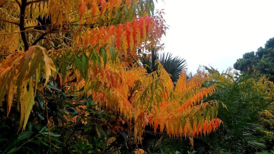 Autunnotropicale Tropicalautumn Gabbiani Birds Multicoloured Trees Alberi Orange Red Yellow Arancione Rosso Giallo