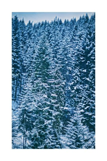 Relaxing Winter Trees Snow Poland Forest
