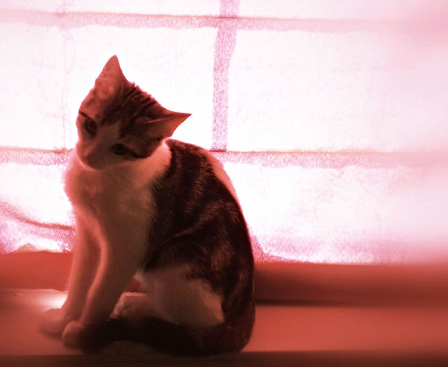 The Red Cat District Animal Head  Animal Themes Cat Close-up Day Domestic Animals Domestic Cat Feline Indoors  Mammal No People One Animal Pets Pink Color Red Cat District Sitting Wall - Building Feature Zoology