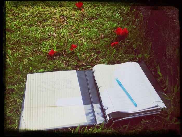 Writing is apart of life Enjoying Life Taking Photos Samoa  Flower