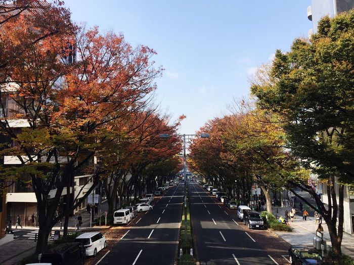 Omotesando Omotesando,japan Omotesandohills Tree The Way Forward Diminishing Perspective Day Outdoors Street Road Transportation Car No People Built Structure Growth Nature Architecture Sky City Beauty In Nature