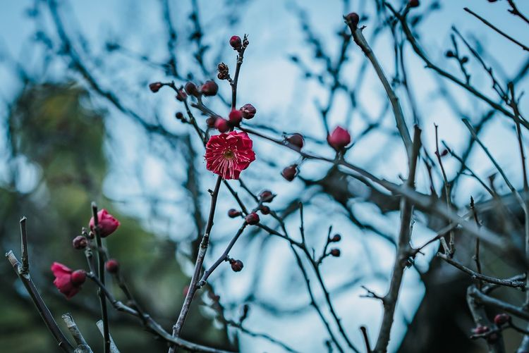 Fruit Berry Fruit Healthy Eating Plant Food Branch Food And Drink Wellbeing Day Beauty In Nature Close-up Nature No People Tree Growth Winter Outdoors Focus On Foreground Freshness Red