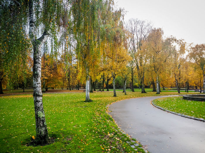 Trees in park during autumn