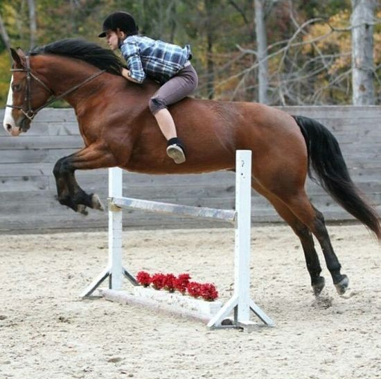 Horse Bareback Jumping Jumpers