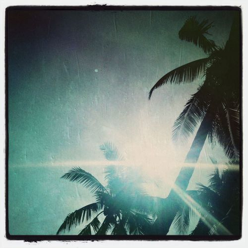 Palms Sunrays