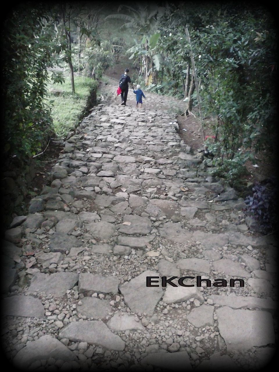 the way forward, text, footpath, adventure, nature, outdoors, day, real people, forest, tree, one person, people