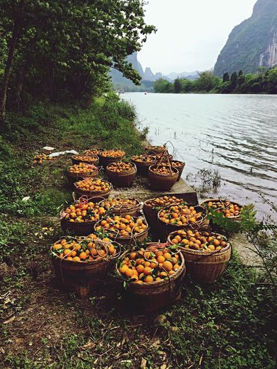 Market bound oranges Nature No People Forest Water