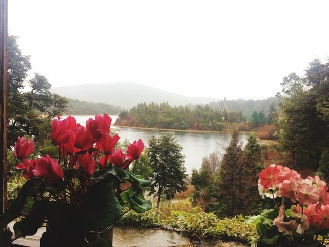 Casa de té ☕️ Plant Water Beauty In Nature Flower Lake Flowering Plant Nature Sky Scenics - Nature Tranquil Scene Day Tranquility
