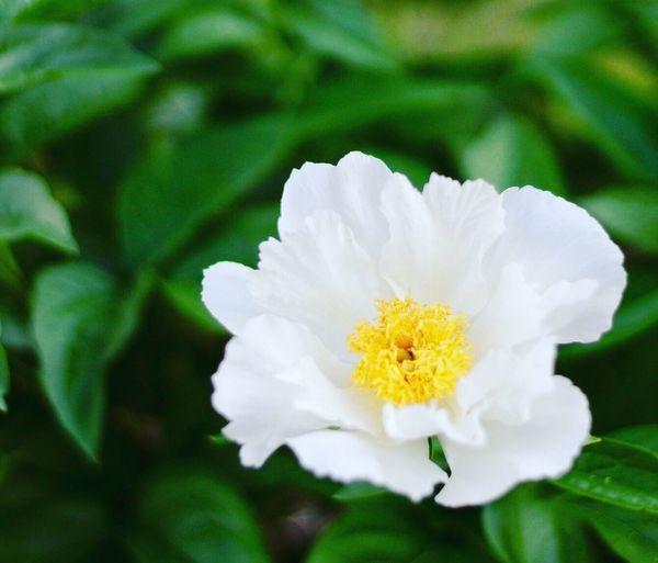#blooms Bloom