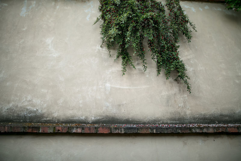 Close-up of plants hanging against wall