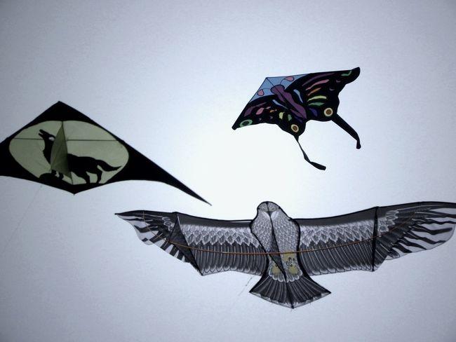 As free as flying kites Kites Amusement  Enjoying Life Flying Mid-air Sky