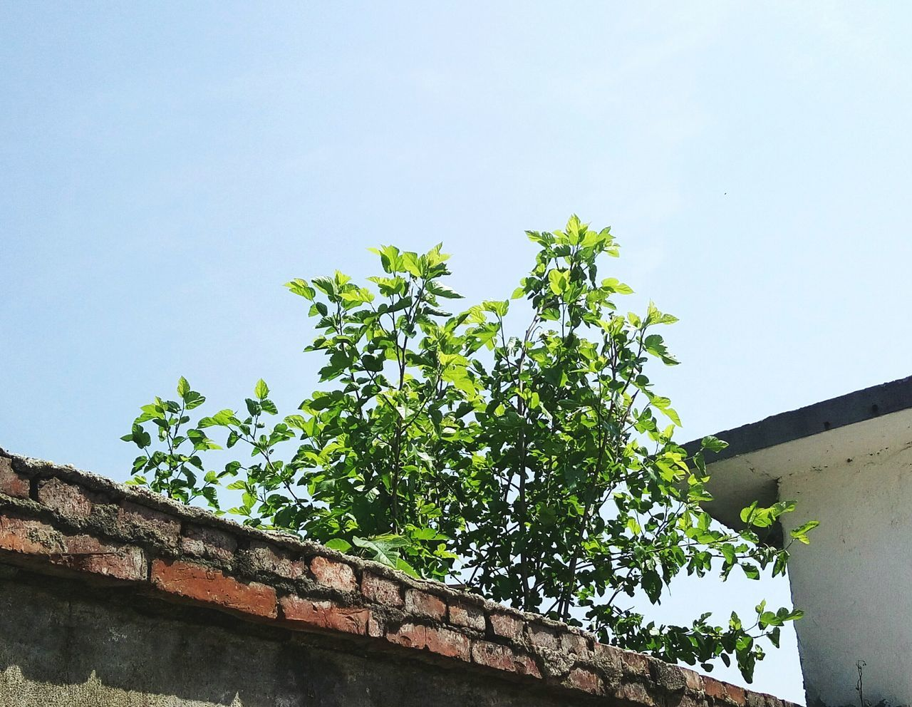 growth, low angle view, no people, day, plant, outdoors, nature, architecture, clear sky, green color, tree, built structure, building exterior, sky, freshness, close-up