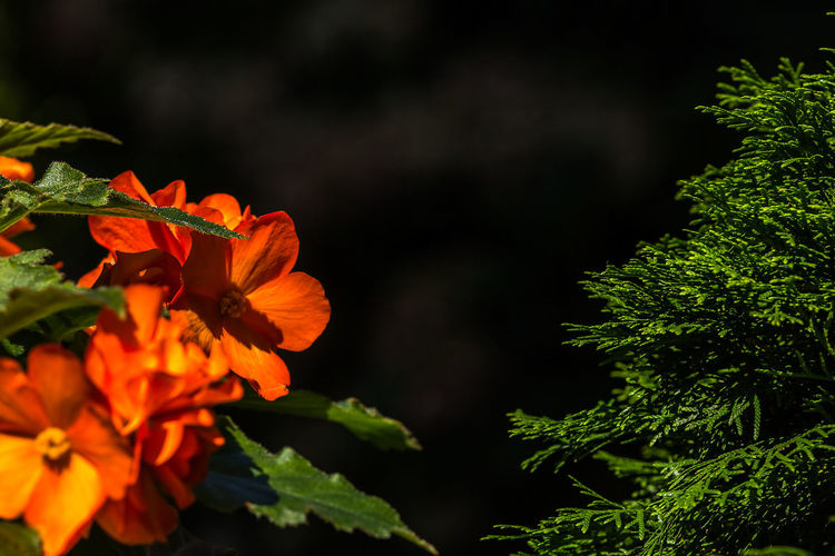 Green Beauty In Nature Blooming Day Flower Flower Head Freshness Growth Nature No People Orange Flower Outdoors Plant