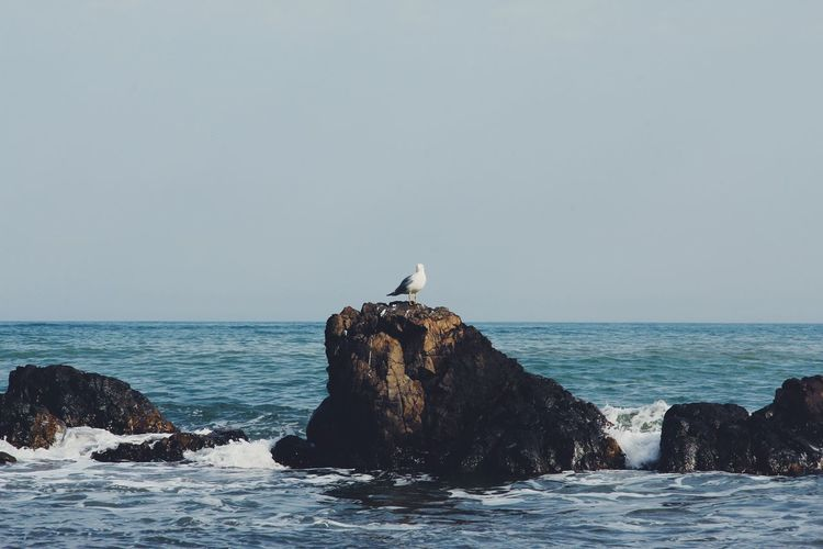 Seagull perching on rock by sea against clear sky