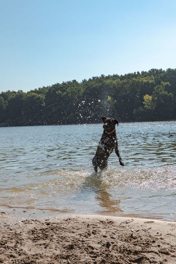 Beach Beach For Dogs Beauty In Nature Clear Sky Day Dog Jumping Dog Land Leisure Activity Lifestyles Motion Nature Outdoors Plant Real People Sky Splashing Sunlight Tree Water