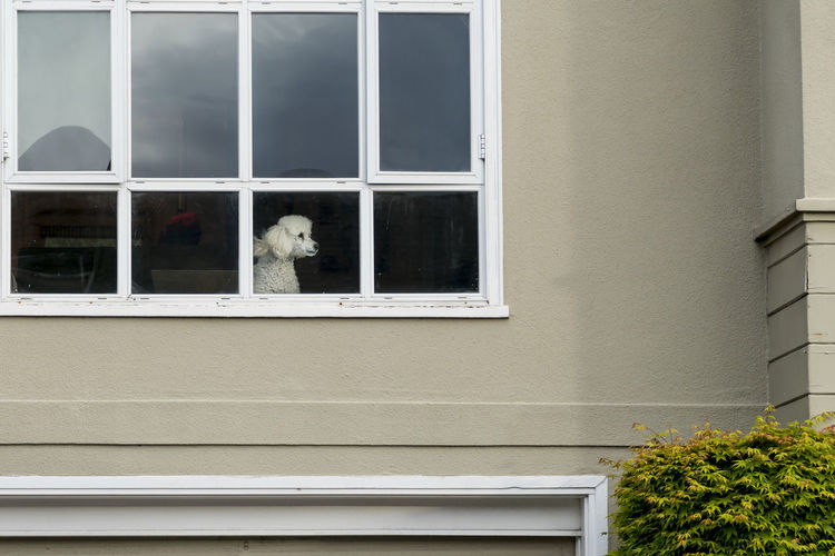 Window Sentry Animal Themes Architecture Best Friend Building Exterior Built Structure Day Dog Domestic Animals Looking Through Window Mammal Nature No People One Animal Outdoors Pets Security Sentry Tree Window