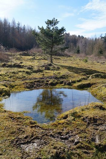 Reflection Water Tree Schaumburg Reflected Glory The Adventure Handbook The Great Outdoors - 2015 EyeEm Awards