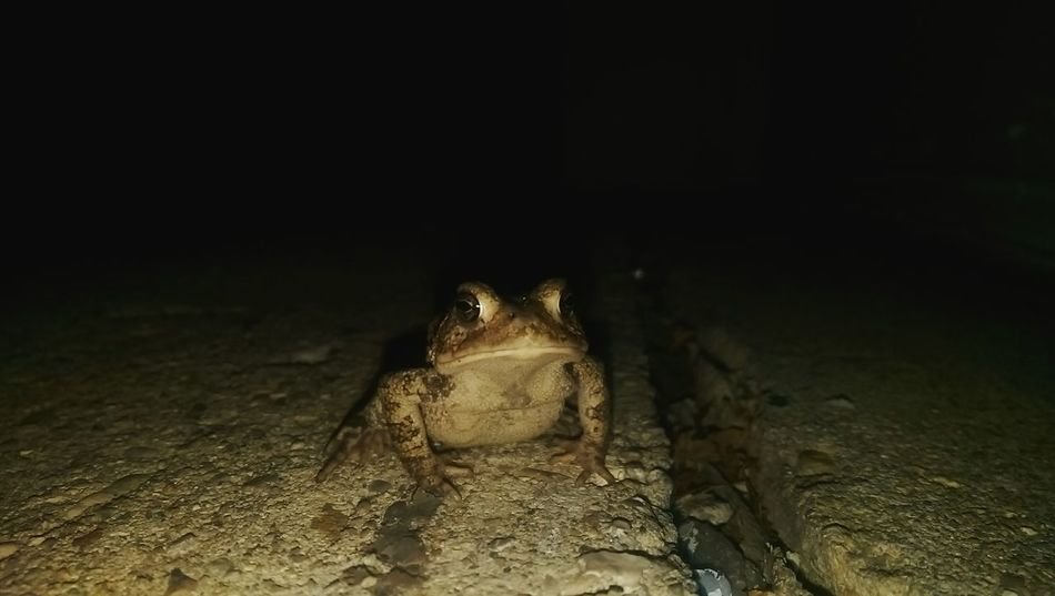 Nightphotography Photography Open Edit Notes From The Underground Frog Animal Photography Check This Out Animals Just Shoot.. Taking Photos