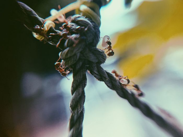 Close-up of plant on branch